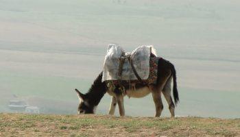 Radtour-Tadschikistan-Usbekistan-Esel-unterwegs_01